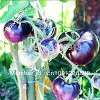 Wholesale OSU Blue Tomato Seeds The Worlds st Blue Tomato Rare