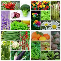 best vegetable gardens - 20 Variety Vegetable Flower Fruit DIY Home Garden Open pollinated Heirloom Seeds Best For Planting TC008 Hun