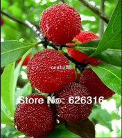 Tree Seeds bayberry plant - 30pcs Bayberry Seeds Myrica Gale Fruit Seeds POT FRUIT PLANT GARDEN BONSAI FRUIT SEED DIY HOME PLANT