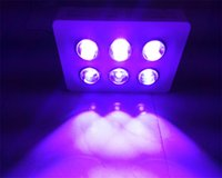 Wholesale Hot sale kg red blue watt grow light for plants growing with six big eyes