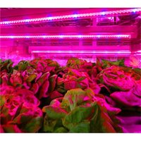 Wholesale T5 W Tube Grow Lamp ft M LED Plant Grow Light Red and Blue for Indoor Plant Growth Years Warranty