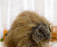 animal porcupine - porcupine simulation animal cm animal plush toys gift magic kids for children yx100