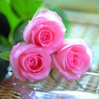 Wholesale 100 Pack Rose Flower Seeds balcony bonsai plant Outdoor Plants Colors J JJ0157 m6