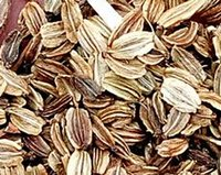 angelica seeds - 500gram one set Angelica sinensis Seed real