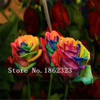 Wholesale Mystic Rainbow Rose seeds Flower Seeds Stratisfied Seeds bonsai garden supply
