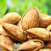 Wholesale 100 Natural Cleaned Dried Hand Selected Almond Kernel Nuts Xinjiang Almond Kernels Badam Chinese almond gram