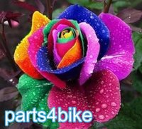 Wholesale the Rarest Bright Rainbow Rose Flower Seeds Professional Pack Seeds Pack Heirloom Garden Bonsai Flower Plant NF575