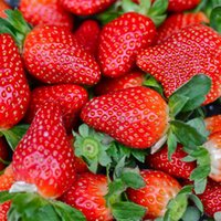 Cheap Non Hybrid 100 Everbearing Strawberry Seeds Fruit Juicy Drought Tolerant Plant