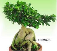 Cheap 50pcs Rare Genuine Ficus Ginseng seeds 22kinds mix pack Ginseng Herbs seeds Banyan tree seeds Free Shipping