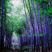 bamboo plants trees - Rare purple Timor Bamboo Seeds Bambusa black bamboo seeds planted courtyard Yi package