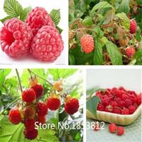 big flower pots - Sale High Quality Raspberry Seed pack Big Raspberry Seeds Fruit Seeds flower pots Strawberry bonsai Blackberry Bonsai See