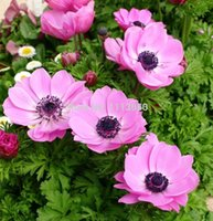 anemone wedding bouquet - 100pcs White Anemone seeds Wedding Home Decoration Bouquet flower Seeds