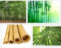 bambusa bamboo - Promotion Rare purple Timor Tree Seeds Bambusa black bamboo seeds planted courtyard Yi package Novel Seed