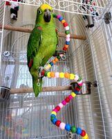 Wholesale Parrot Toy Bouncing Cage Bird Hanging Spiral Ladder Cockatoo Parakeet Toys CM