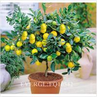 Wholesale LHO Rare Lemon Tree Infoor Outdoor Available Heirloom Fruit Seeds DH04