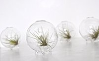 aquarium moss - 4pcs set Marimo Footed Orb Terrariums Moss Ball Aquarium Miniature Footed Bud Vase Container Home Decor Office Gift