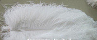 Wholesale 100pcs cm white Ostrich Feather Plume for Wedding Centerpiece kit