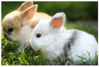 animals eating food - DIY Your Home Wall Distant Dream Cute Bunnies Eating Food x75cm posters