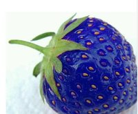 Cheap Fruit seeds Best blue strawberry seeds