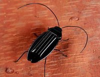 Wholesale Top quality Solar Power Cockroach Insect Bug Teaching Toy Gift