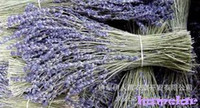 Wholesale Xinjiang lavender flower new dried lavender flowers Eternal life flower package mail grams