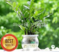 Wholesale Zamioculcas Zamiifolia Small potted plants small money tree bag