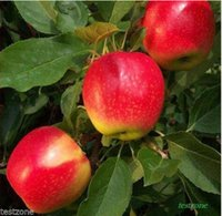 Cheap 30%OFF New Arrival bonsai apple tree seeds home garden fruit seed plus mysterious gift