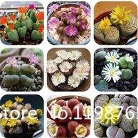 Cheap 2015 Hot 100 Rare Mix Lithops Seeds Living Stones Succulent Cactus Organic Garden Bulk flower Seeds
