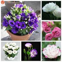 achat en gros de eustoma fleur-Hot Sale 7 Couleurs disponibles Eustoma Graines vivaces à fleurs Plantes Plantes en pot Fleurs Graines Lisianthus Semences - 100 PCS
