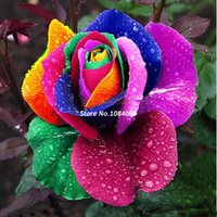 Wholesale High Quality Drop Shipping Seeds Rose Seeds Include Black Red Blue Purple Pink Rainbow Colors SV16 SV003023