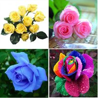 Wholesale Beautiful Rainbow Rose Seeds Multi colored Rose seeds Rose Flower Seeds
