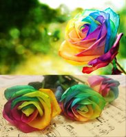 Wholesale 100 Rare Rainbow Rose Flower Seeds Your Lover Multi color Plants Home Garden