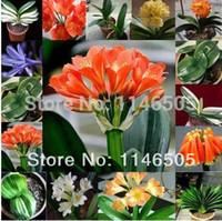 Wholesale 2014 New Mini Mix assortment Clivia Seeds Multi Colored Flower Pots Planters Bonsai Flower Seeds For Home Garden