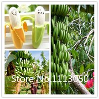 banana plants - Sale kinds Bonsai Banana Seeds Genuine Organic Blooming Fruit Seeds Garden Plant