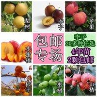 Wholesale Brin black plum fruit tree seedlings seedlings Plum saplings Friar plums grafted fruit tree seedlings seedlings z1