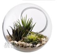 Wholesale 2pcs set round glass succulent terrarium moss terrarium indoor garden terrarium desktop fish tank for house ornament home decor