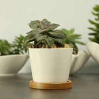 bamboo plants pots - Modern Style Decorative White Round Ceramic Crafts Succulent Planter Flower Mini Pot with Bamboo Tray EB DJ15605