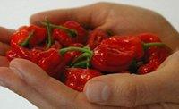 Wholesale LXL XTrinidad Moruga Scorpion Chilli Seeds WORLD RECORD Hot Chilli Seeds fire