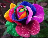 Wholesale S Rare Rainbow Rose Flower Seeds Your Lover Multi color Plants Home Garden