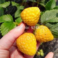 Cheap Vegetables and fruit seeds Yellow Strawberry Seeds Bonsai plants Seeds for home & garden 500 seeds bag free shipping