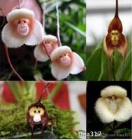 Семена цветущие Цены-Цветочные горшки посадочные Красивые лицо обезьяны орхидеи семена сорта Несколько Бонсай растения Семена для дома сад 50 семян ПК 1748