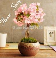 Cheap bonsai palm Best garden alarm