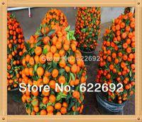 Wholesale 50 pack Potted Edible Fruit Seeds Bonsai Climbing Orange Tree Seeds A3