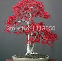 Cheap Free Shipping 70pcs American Maple Tree Seeds Bonsai Plants DIY Home Garden
