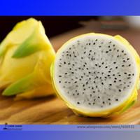 Wholesale Rare Large Yellow Dragon Fruit Pitaya Organic Seeds Professional Pack Seeds Pack Sweet Selenicereus Megalanthus E3267
