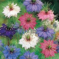 Wholesale 400 Beautiful Love in a Mist Seeds Garden New Arrival