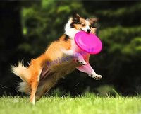 Wholesale 18cm Pet Dog Frisbee Flying Disc Saucer Playing Treating Training Funny Home Garden Outdoor pet supply dog toys