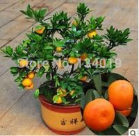 Wholesale 100pcs bag Balcony patio potted fruit trees planted seeds kumquat seeds orange seeds tangerine citrus