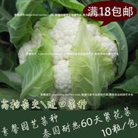 Wholesale days cauliflower seeds Thai heat generation hybrid flower seeds tight broccoli cauliflower seeds