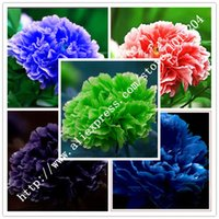 Wholesale 10PC Rare flower seed five varieties of the world s rare peony seed senior bonsai seeds garden plants